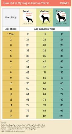 The 7-year rule is actually way off. How old is your dog in human years then? Use this chart as a guide. If you want to dig a little deeper, follow the link for super interesting info.