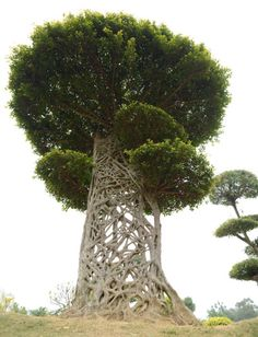 The 'Spider's Web' tree trunk in a park in Nanning, Guangxi, China