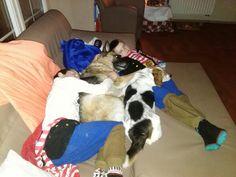 Met de hondjes in de zetel