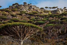 The archipelago of Socotra is situated in the Indian Ocean close to the Gulf of Aden between Yemen on the Arabian Peninsula and Horn of Africa.