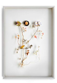 Flower Constructions by Anne ten Donkelaar, via Behance