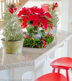 A poinsettia in a box wreath, like a tiny formal garden!  Christmas Home Tour 2013-8  from www.fourgenerationsoneroof.com