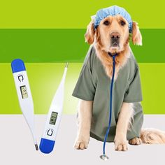 Angelwing Pet Digital Thermometer Electronic Thermometer Dog Accurate Portable -- For more information, visit image link. (This is an affiliate link) #DogHealthSupplies