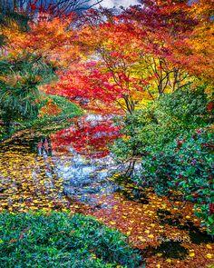 Japanese Gardens, via Flickr.http://www.flickr.com/photos/dfikar1/8233981051/lightbox/
