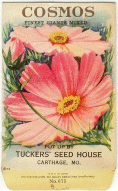 Vintage seed packet