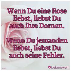 Wenn Du eine Rose liebst, liebst Du auch ihre Dornen. Wenn Du jemanden liebst, liebst Du auch seine Fehler. #sprüche #rose