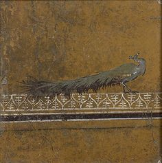 Peacock facing right Fresco, mid-1st century CE.  The peacock was a delicacy in Rome, not because it tasted good, but because it cost so much. For example, in Petronius' Satyricon, the pompous Trimalchio flaunts his wealth by serving peacock eggs to his dinner guests. Imported from India as pets, peacocks enhanced the Roman garden with colorful plumage and a nasty demeanor.
