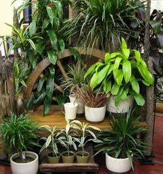 5 plants to clean air within the home