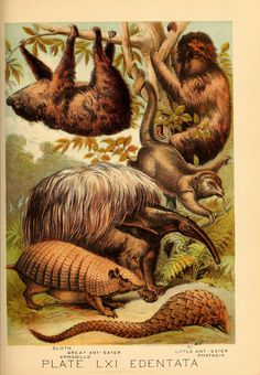 Johnson's household book of nature.  New York,H.J.Johnson,[1880].  Biodiversitylibrary. Biodivlibrary. BHL. Biodiversity Heritage Library.