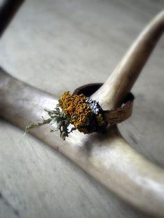 birch and lichen ring