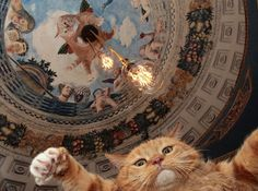 "fatcatartru: ""Zarathustra the Ceiling Cat rules  From today photo session #fatcatart #zarathustralive #art #cat "" Jdjdjdjfjebd"