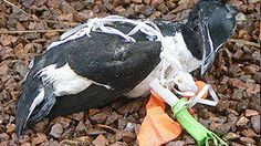 Petition · Ban mass balloon releases · Change.org