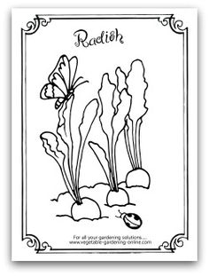 Radishes And Butterfly Coloring Page Free Vegetable Garden Books Printable Activity Pages For