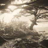 Oregon Coast Path by Tom Marks