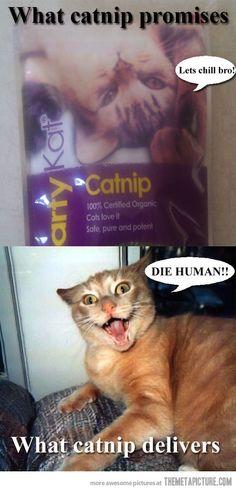 Catnip false advertising…