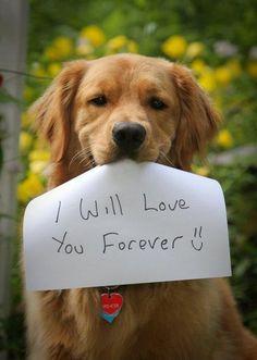 HOJE é o Dia Internacional do Animal Abandonado! -  NÃO ABANDONE, NÃO COMPRE, ADOTE!!!  - http://www.be-a-woman.com/animais-casa/hoje-e-o-dia-internacional-do-animal-abandonado/