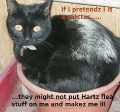 Made by http://sarahs-cat-spot.blogspot.com.au/