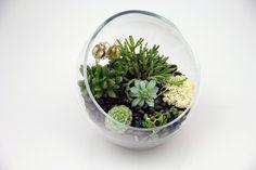 Cactus container