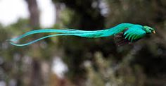 Image result for quetzal flying