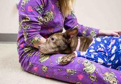 同様に、この甘い顔に目を覚ますためになって想像してみてください。 | A Shelter Is Offering Doggy Sleepovers And Oh…