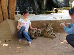 To make them pose for photos with tourists, tiger cubs are separated from their mothers and brutally trained. World Animal Protection wants to end this cruel practice and believes that wild animals belong in the wild. (CNW Group/World Animal Protection)