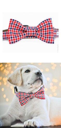 Dapper doggie / crewlala