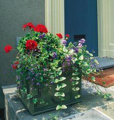 Red geraniums, purple violas, and blue lobelia add a splash                             of color.
