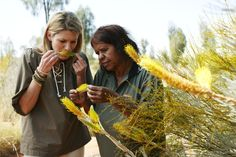 Indigenous Tourism - Ayers Rock Resort