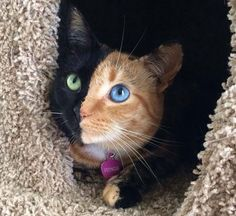 Animals With Vitiligo - Yahoo Image Search Results