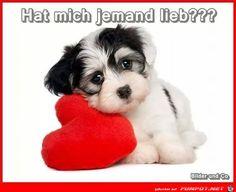lustiges Bild 'Hat mich jemand lieb.jpg'- Eine von 60134 Dateien in der Kategorie 'Lustiges' auf FUNPOT.