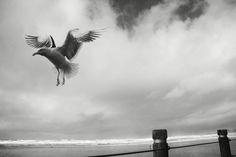 Fly away #twinshutter #photographs #photography #photographer