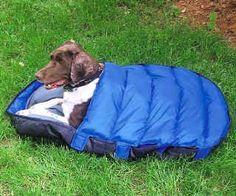 sleeping bags, sleep bag, greyhound, dog