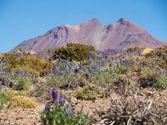 Chili Argentinië Mount Rainier, Chili, Tours, Mountains, Nature, Travel, Saints, Naturaleza, Viajes