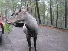 Safari Park II, Indonesia