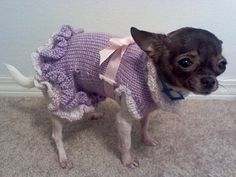 hee hee he hee Free Pattern for the A-Line Ruffled Dog Sweater Dress « autumnblossomknits Knitted Dog Sweater Pattern, Knit Dog Sweater, Dog Pattern, Free Pattern, Pet Sweaters, Small Dog Sweaters, Crochet Dog Clothes, Pet Clothes, Dog Clothing