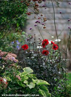 Butterflies sway, songbirds sing and hedgehogs roam in a bountiful garden in England's south-west. ACx