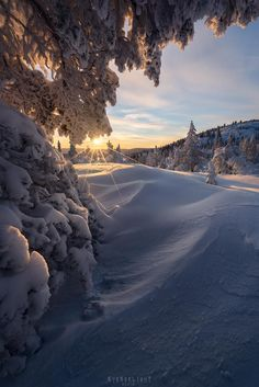 An icy cold but magical sunrise above a white winter wonderland  Buskerud Norway [OC] [1280x1920]