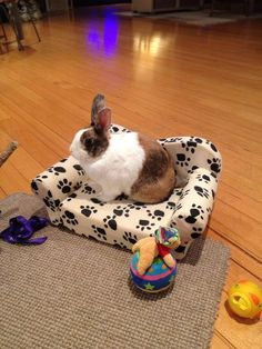 Bunny has his very own couch.