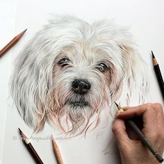 ideas color pencil Cats Dogs and an Owl Pencil Drawings. Cats Dogs and an Owl Pencil Drawings. By Angie. Animal Paintings, Animal Drawings, Pencil Drawings, Art Drawings, Pencil Sketching, Realistic Drawings, Pencil Art, White Dogs, Dog Portraits