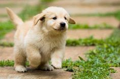That is like the fattest, fluffiest puppy I have ever seen!