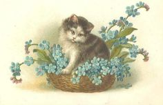 image 022-006 Pretty Cat and Flowers in Basket
