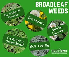Recognize any of these wicked little weeds? Grass Weeds, Weed Control, Landscaping Tips, Lawn Care, Ecology, Dandelion, Wicked, Gardening, Landscape