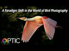 Nikon D500 Review, A Wildlife Photographer's Perspective - YouTube