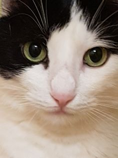 Dog Cat, Cats, Animals, Breeds Of Cats, Gatos, Animais, Animales, Kitty Cats, Animaux