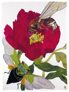 Sarah Graham, artist, botanical works on paper, 2008 to present. Botanical Illustration, Botanical Art, Illustration Art, Sarah Graham Artist, Watercolor Projects, Insect Art, Beautiful Paintings, Collage Art, Painting & Drawing