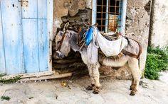 Typisches #Transportmittel und #Haustier in #Griechenland © Jürgen Garneyr Mykonos, Camel, Greece, Horses, Animals, Santorini, Transportation, Greek, Adventure