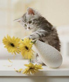 """""""J'aime pas les fleurs jaunes !"""""""
