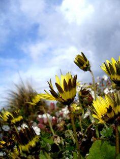 Flores - Ana Mota