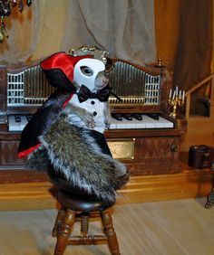 Phanut of the Opera (Sugar Bush Squirrel)