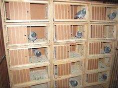 pigeon lofts | Results from the last 7 years